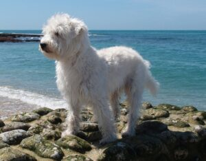 Probiotics Benefits for Family Dogs